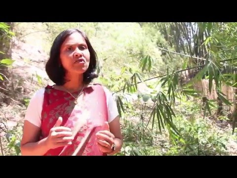 Support Bashida in conservation of fish and river ecosystems of India