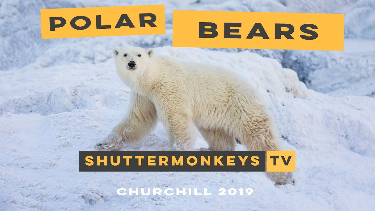 Churchill Polar Bears Photo Adventure