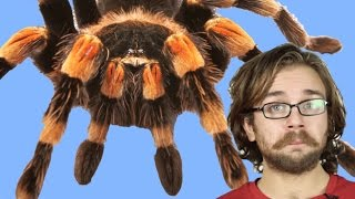 Dünyanın En Zehirli Örümceği Hangisi?