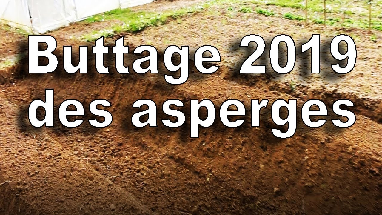Comment Planter Des Asperges buttage 2019 asperges blanches