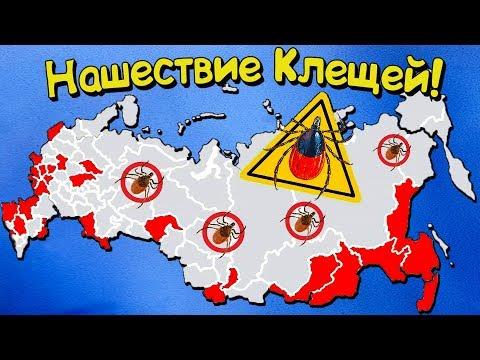 Опасные регионы России где вас укусят КЛЕЩИ! Инструкция по защите!