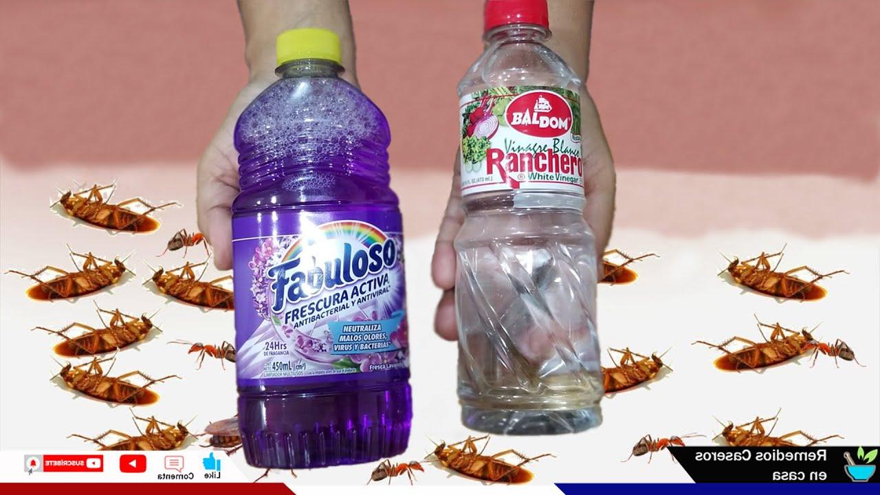 Pon esto en tu casa por 1 hora, Y no veras más cucarachas, moscas y mosquitos