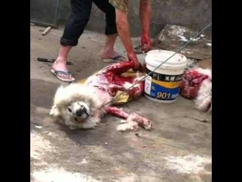 China's Dog Meat Festival