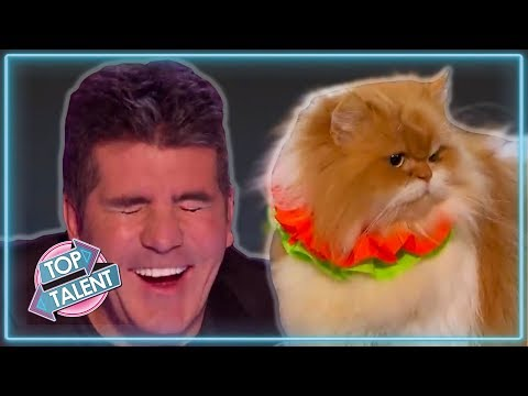 MOST VIEWED Animal Auditions Ever On Got Talent! | Top Talent
