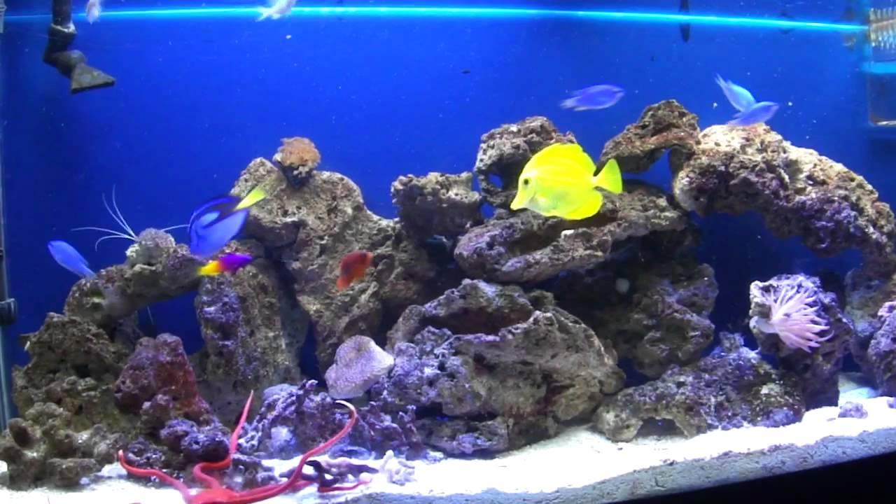 Salt Water Fish Tank   YouTube