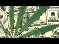 Marijuana Stock Market Overview: WATCH BEFORE INVESTING!