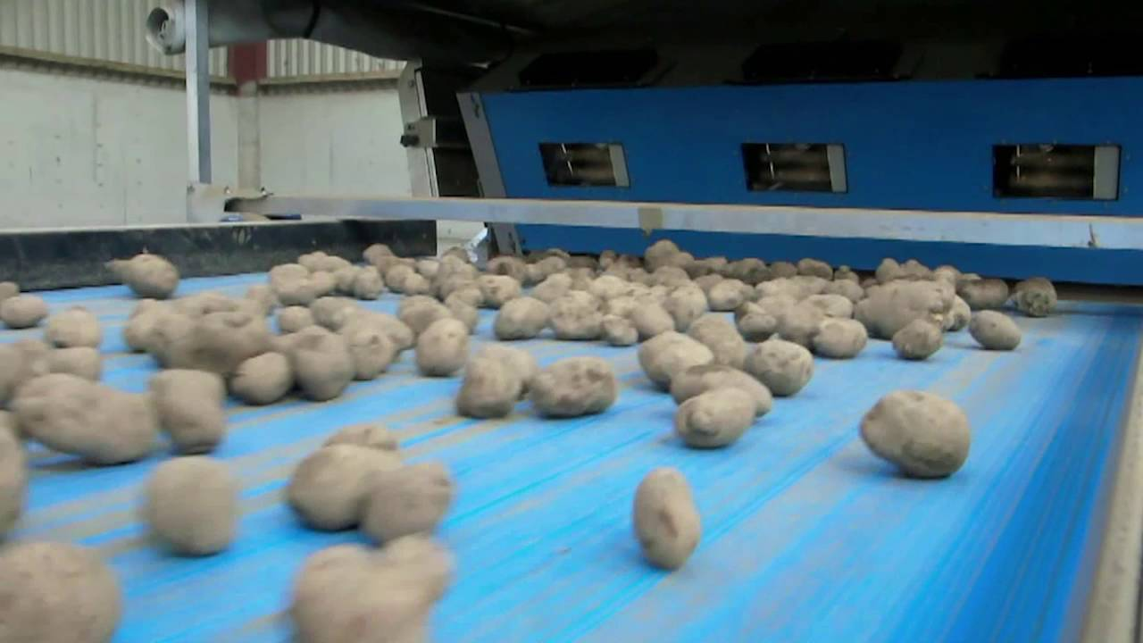 Whole unwashed potato sorting machine Field Potato Sorter (FPS) - TOMRA Sorting