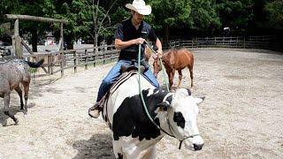 丑年に合わせ「乗牛体験」実施へ 六甲山牧場