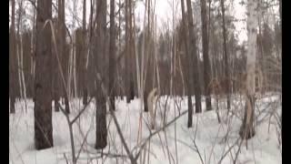 Легенды старого охотника Заказник Ульдуры ЕАО (СТС-Биробиджан)(, 2014-04-03T01:26:47.000Z)