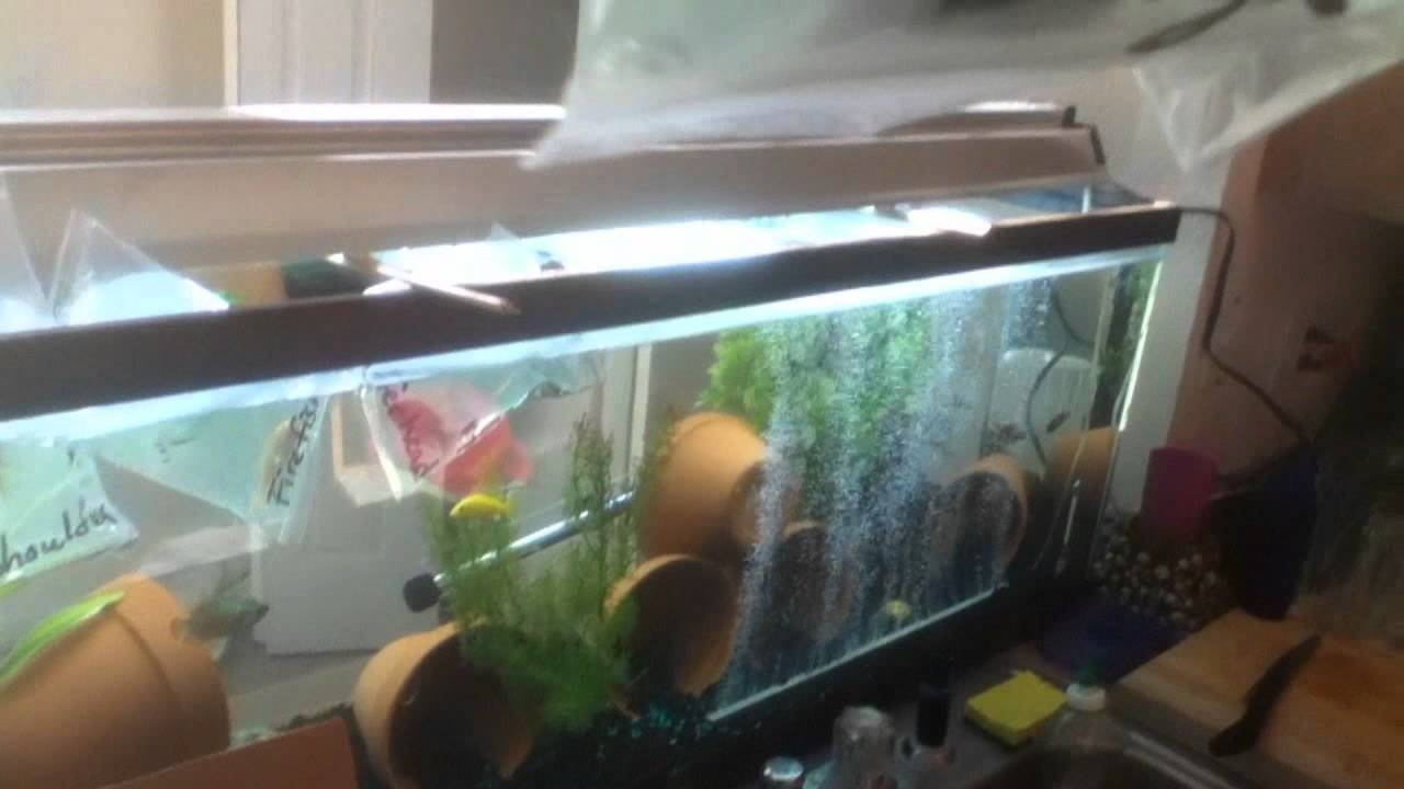 Peacock Cichlid order from LiveFishDirect - Unboxing/Review