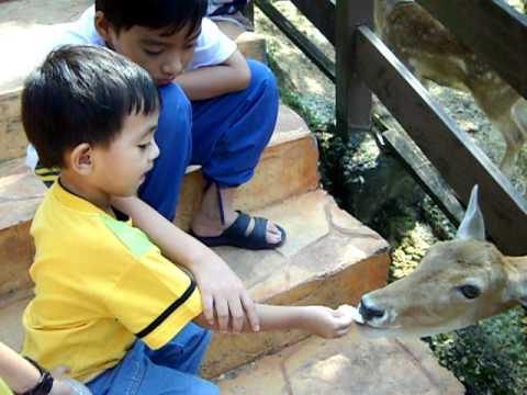 Cucu orang Gunung Mesah Hulu, Gopeng di Taman Rusa.