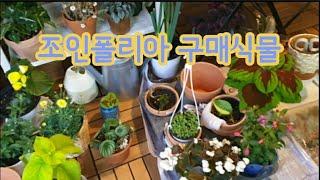 조인폴리아 구매식물 소개 [ 이케아 선반 정리 ]