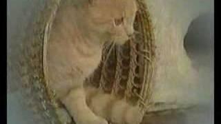 Joël - Een doodgewone kat (Deadline voor dieren)