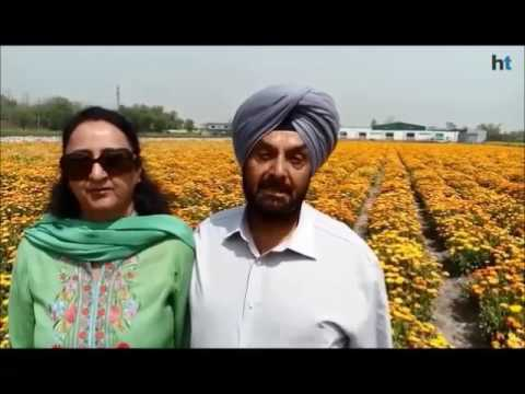 Floriculture in Punjab: Blooming business, but only a few smell success