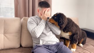 Cute Bernese Mountain Dog Puppy Reaction to me Crying - PRANK