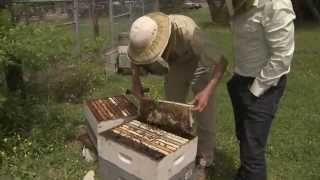Research to Save the Honeybee - America's Heartland