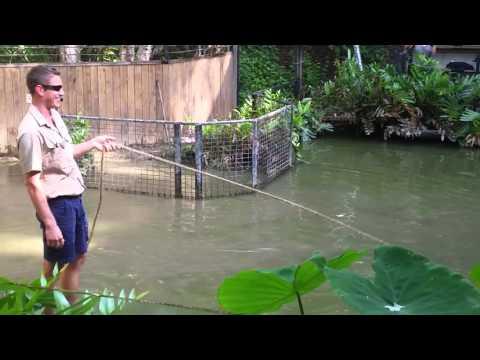 Croc Attack Australia!