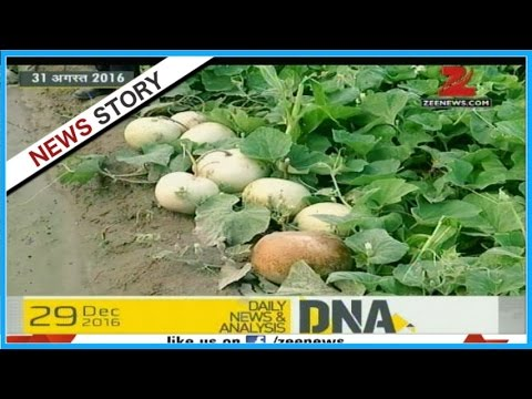 DNA: Most vegetables fail FSSR guidelines; may lead to cancer