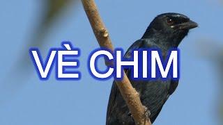 BE NA TINH NGHICH Tập đọc lớp 2 - Vè Chim -giọng đọc Bé Na