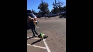PARENTING FAIL! Kid on a leash FUNNY