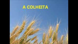 A COLHEITA - ALDA CÉLIA - PLAYBACK LEGENDADO