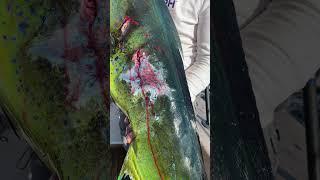 Dolphin Attacked by Marlin #Shorts