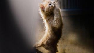 Кот показывает как его погладить)(Кот показывает хозяйке как его надо погладить. Обучение работы в YOUTUBE http://superpartnerka.biz/shop/go/r173085922231/p/freeyoutube..., 2016-02-17T19:26:40.000Z)