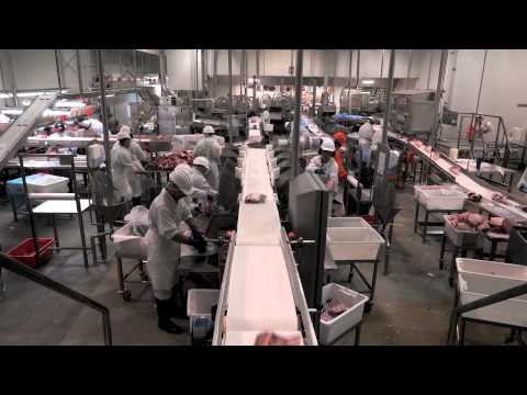 Scott - Automated Lamb Processing At JBS Bordertown