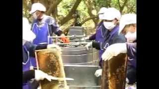 Bee Farm Raising bees  Keeping Honeybee thailand เลี้ยงผึ้ง การเลี้ยงผึ้ง น้ำผึ้ง