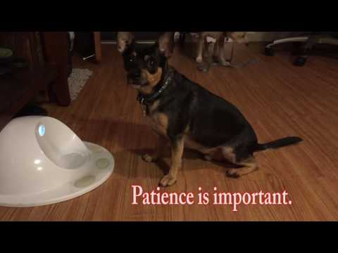 Such Good Dogs presents:  Learning to use Clever Pet.