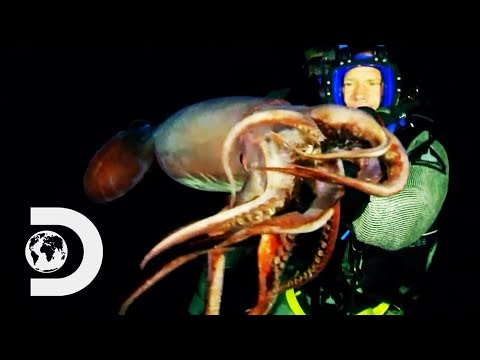 Steve Backshall Swims With The Deadly Humboldt Squid | Swimming With Monsters