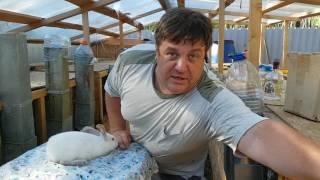 Лечение вздутий у кроликов ИННОВАЦИОННЫЙ метод !!!!! INNOVATIVE method