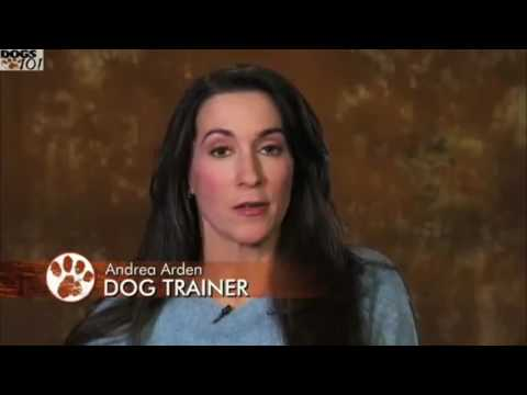 Dogs 101 Brittany Spaniel: The Official Brittany Club