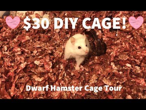 $30 CAGE TOUR! DIY Dwarf hamster basic home