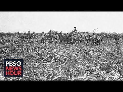 Before Cotton, Sugar Established American Reliance On Slave Labor