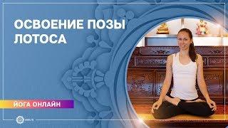 Йога для начинающих. Видео уроки. Хатха-йога. Комплекс для освоения падмасаны (позы лотоса).