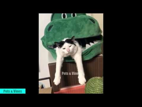 Funny cute cats and kittens compilation - Pets Tik Tok