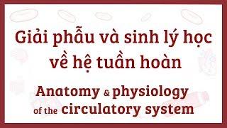 Giải phẫu và sinh lý học về hệ tuần hoàn (hệ tim mạch)