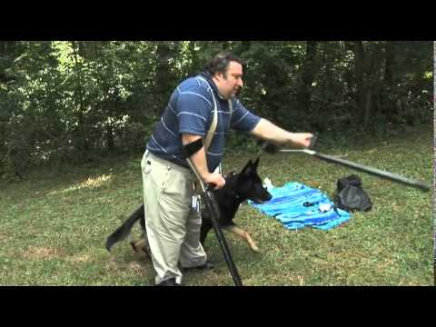 Maryland Dog Training  Service Dog Testimonial