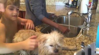 Repeat youtube video DOG WASHING FAIL!!