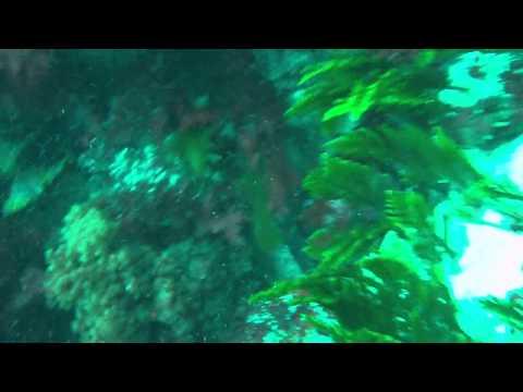 Abalone Diver Port Lincoln south Australia