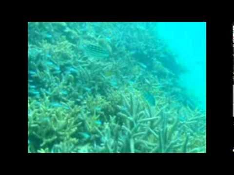 珊瑚礁と小魚の大群