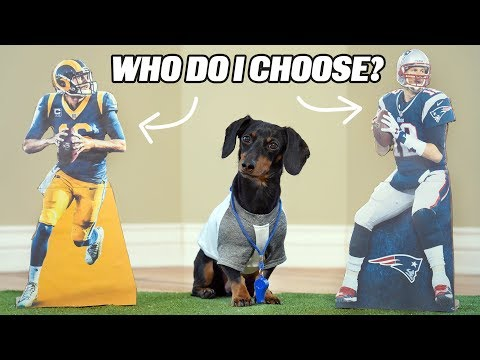 Nina Jackson - Watch: Dachshund Predicts Who Will Win Superbowl 53