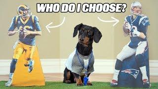 crusoe-picks-superbowl-winner-loser-dog-predicts-superbowl