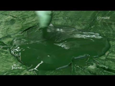 Algues : La spiruline bientôt dans nos assiettes (Vendée)