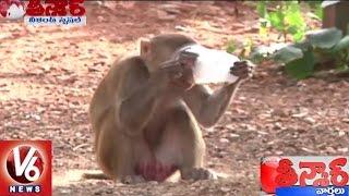 People In Corcern With Monkeys At Kinnerasani Wildlife Sanctuary   Khammam   Teenmaar News