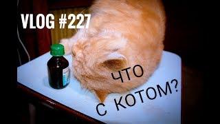 03.11.18 РЕАКЦИЯ КОТА НА ВАЛЕРЬЯНКУ!