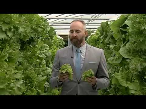 The future of farming   Vertical, hydroponic crops   YouTube 360p