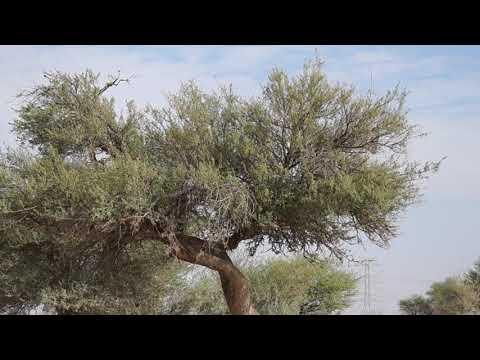 Tree Trees 🌲 Sony Alpha A57 Valley