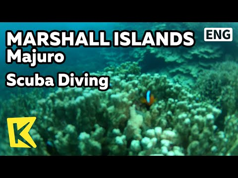 【K】Marshall Islands Travel-Majuro[마셜 여행-마주로]산호 군락 스쿠버다이빙/Scuba Diving/Sea/Coral/Clownfish